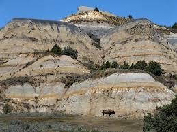 theodore roosevelt national park photo essay  theodore roosevelt bison