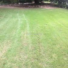 trugreen lawn service review 223848