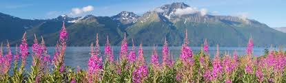 The following is a greeting given in one of the 20 indigenous languages recognized by the state of alaska. Covid 19 Traveler Information Visit Anchorage