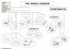 Venn Diagram Living And Nonliving Things Living And Non Living Things Interactive Worksheet