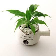 CERAMIC POT U0026 INDOOR PLANT