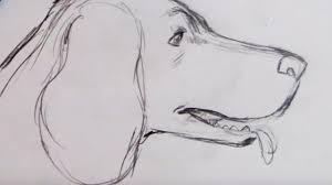 lab dog drawing easy. Wonderful Dog Throughout Lab Dog Drawing Easy E