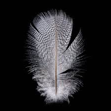 feather patterns hidden feather patterns tell the story of birds cosmos