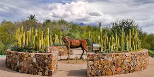 a sculpture of a horse at tohono chul park in tucson picture