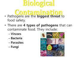 Skin protection includes items such as gloves, aprons, full bodysuits, and boots. 4 Types Of Contamination Different Types Of Contamination Page 4 Line 17qq Com Food Contamination Refers To When Something Gets Into Food That Shouldn T Be There Thereby Making The Food