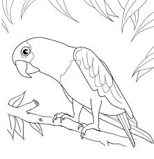 Printable Bird Coloring Page Parrot Animal Coloring Pages Of