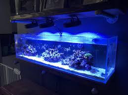 Kessil Aquarium Light Texas 3 Kessil A80 Tuna Lights Reef2reef Saltwater And