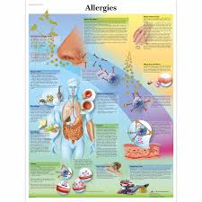 Asthma Drug Therapy Chart Allergies Chart