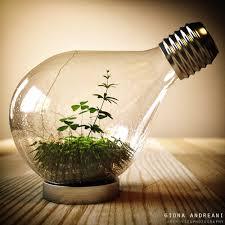 Terrarium Light Light Bulb Terrarium Giona Andreani