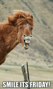 """Résultat de recherche d'images pour """"photo animaux drole"""""""