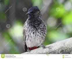 207 Mavis Bird Photos - Free & Royalty-Free Stock Photos from Dreamstime