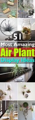 Air Plant Display 51 Most Amazing Air Plant Display Ideas Balcony Garden Web