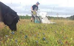 Generosity and economic hardship dovetail in Guysborough County field full  of free blueberries | Provincial | News | The Chronicle Herald