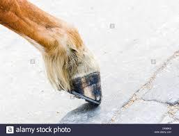 Horse Hoof Anatomy Stock Photos Horse Hoof Anatomy Stock