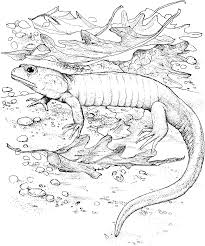 Beautiful Animal Camouflage Coloring Pages Printable Top Free