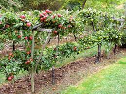 Chapter 2 What Are The Best Forms Of Fruit Trees To GrowFruit Tree Shapes