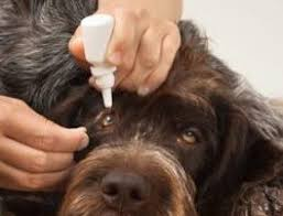 Nux vomica bei hunden
