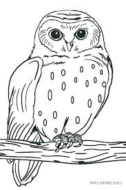 Halloween Owl Coloring Pages Antiatominfo