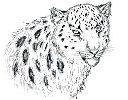 Leopard Coloring Pages Animal Jam Coloring Pages Snow Leopard Snow