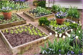 Small Picture Planning Vegetable Garden Layout Trendy Garden Plans Vegetables