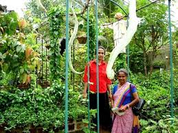 Small Picture Family Business Gardens FBG Urban Agriculture In Sri Lanka