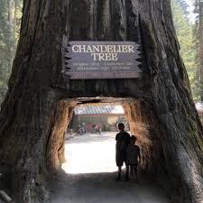 photo of drive thru tree leggett ca united states