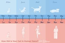 Dog To Human Years Conversion Chart How Old Is Your Cat In Human Years