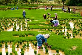 planting the seeds of a real green revolution com kerala tour packages
