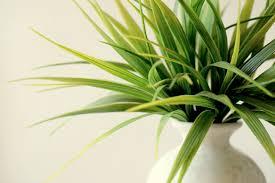 best indoor plants for office. Best Indoor Plants For Office T