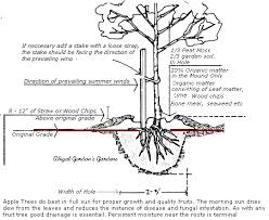 Care And Planting Of Bareroot Fruit TreesPlanting A Fruit Tree