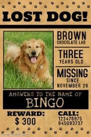 Missing Cat Poster Template Lost Dog Flyers Template Under Fontanacountryinn Com