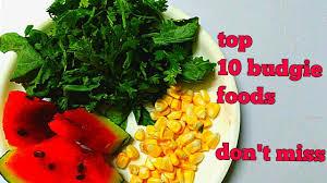Budgie Diet Best Budgie Diet 10 Best Foods In Hindi Urdu English