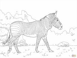 Small Picture Coloring Picture Printable Coloring Pages Zebra Baby