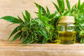 Image result for BUY CBD OIL