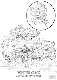 Small Picture Maryland State Tree coloring page Free Printable Coloring Pages