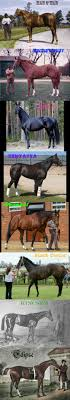 best ideas about all the pretty horses some of the very best race horses of all time man o war secretariat ruffian zenyatta frankel black caviar kincsem and eclipse beautiful line of