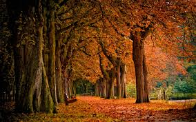 Free Download Adorable Autumn Images