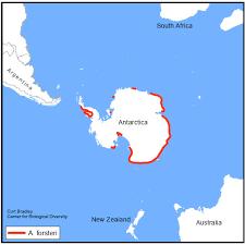 emperor penguin habitat map.  Map RANGE MAP The Emperor Penguin  Intended Emperor Penguin Habitat Map E
