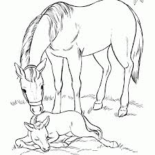 Clydesdale Horse Coloring Pages To Print With Free 4 7 And