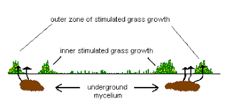 mycelial form mycelium