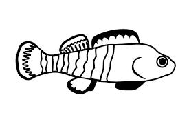 Darters Fish Svg Cut File By Creative Fabrica Crafts Creative Fabrica