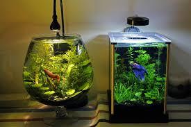 betta fish tank ideas a large brandy sniffter