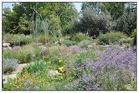 many desert plants and dryland plants are interplanted with high elevation alpine plants in the dbg alpine and rock garden i was impressed with the