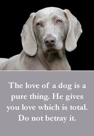 Dog Quotes Love And Loyalty Impressive 48 Beautiful Dog Quotes Some Touching Some Poignant Some Funny