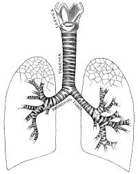 Respiratory System Clipart Clipart Kid Coloring