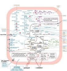 Metabolic Pathways Chart Uniformed Services University