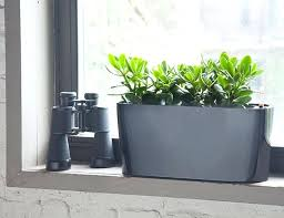 jade plant good indoor plants best low light australia
