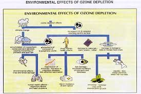 ozone layer depletion causes effects and solutions effect of ozone depletion on environment