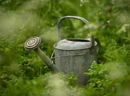 Image result for watering cans