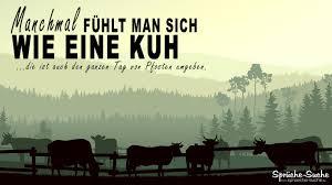 Doofe Kollegen Sprüche Kühe Sprüche Suche